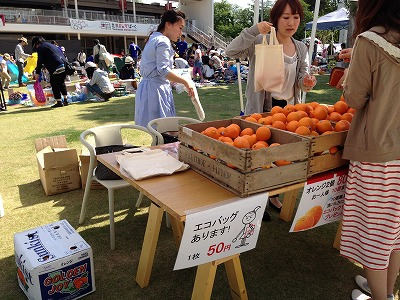 8_orange.jpg